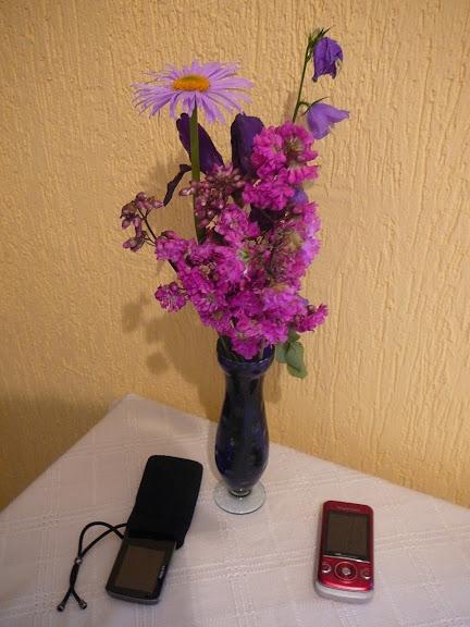 """Смолка обыкновенная """"Плена"""" (Viscaria vulgaris """"Plena"""") - 4"""