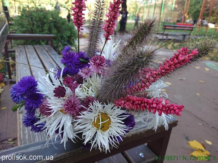 """Горец стеблеобъемлющий """"Файртейл"""" (Persicaria amplexicaule """"Firetail"""") - 3"""