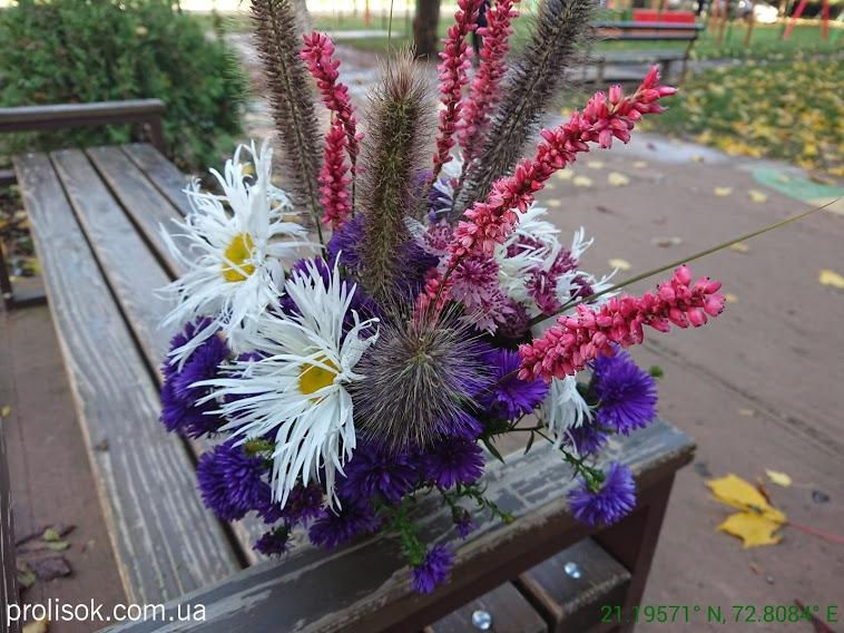 "Гірчак стеблообгортний ""Файртейл"" (Persicaria amplexicaule ""Firetail"") - 8"