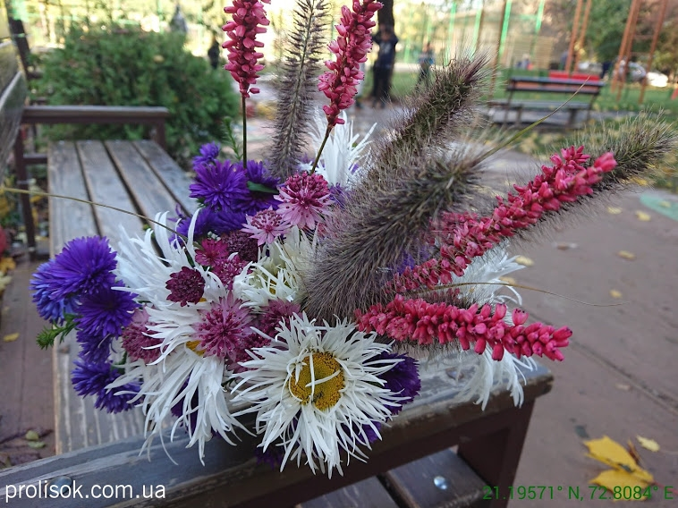 "Гірчак стеблообгортний ""Файртейл"" (Persicaria amplexicaule ""Firetail"") - 3"